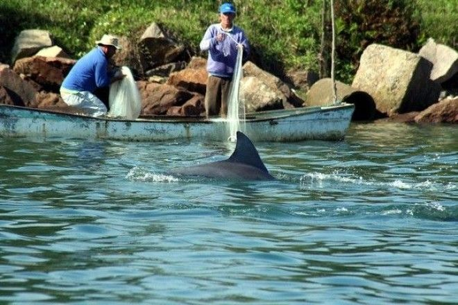 Перевод песни Alexander Rybak (Александр Рыбак) - Dolphin