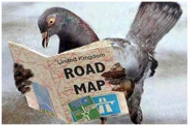 Загадка века Как почтовые голуби находят дорогу